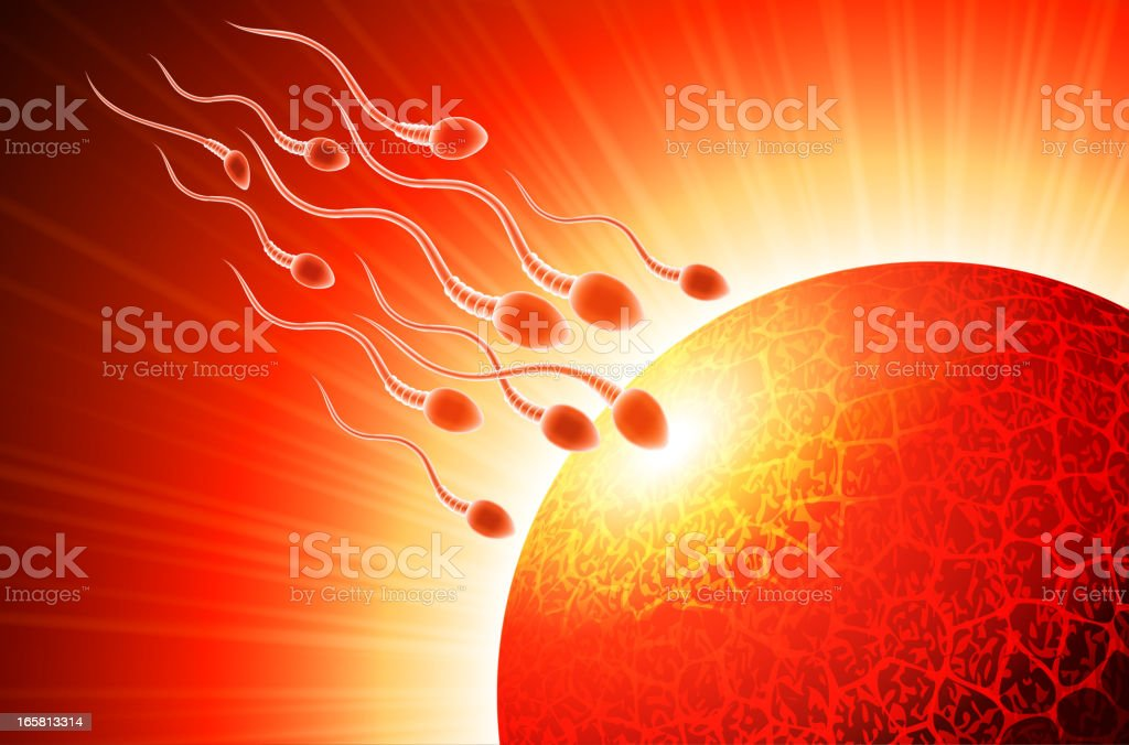 Sperm and Egg Background vector art illustration