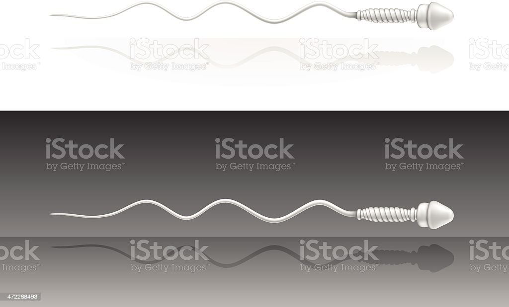 Spermatozoon royalty-free stock vector art
