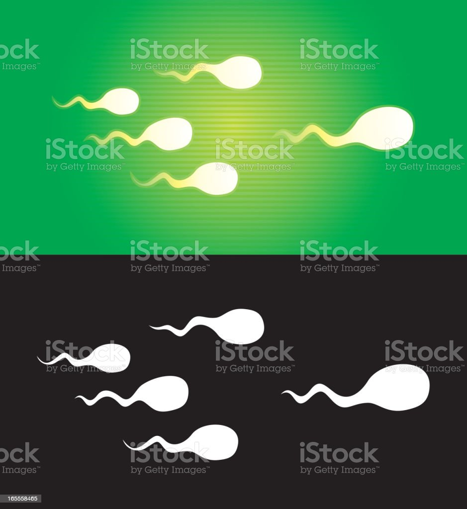 sperms royalty-free stock vector art
