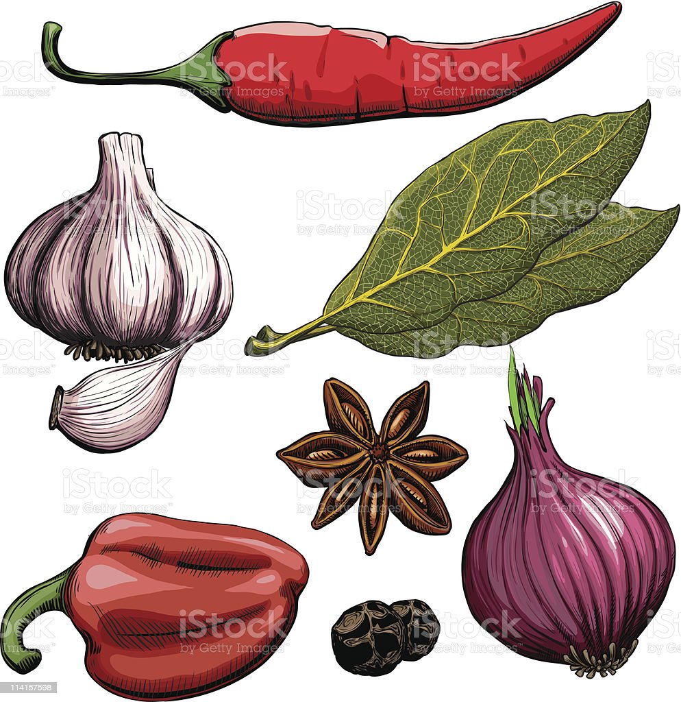 Spice drawing woodcut method royalty-free stock vector art