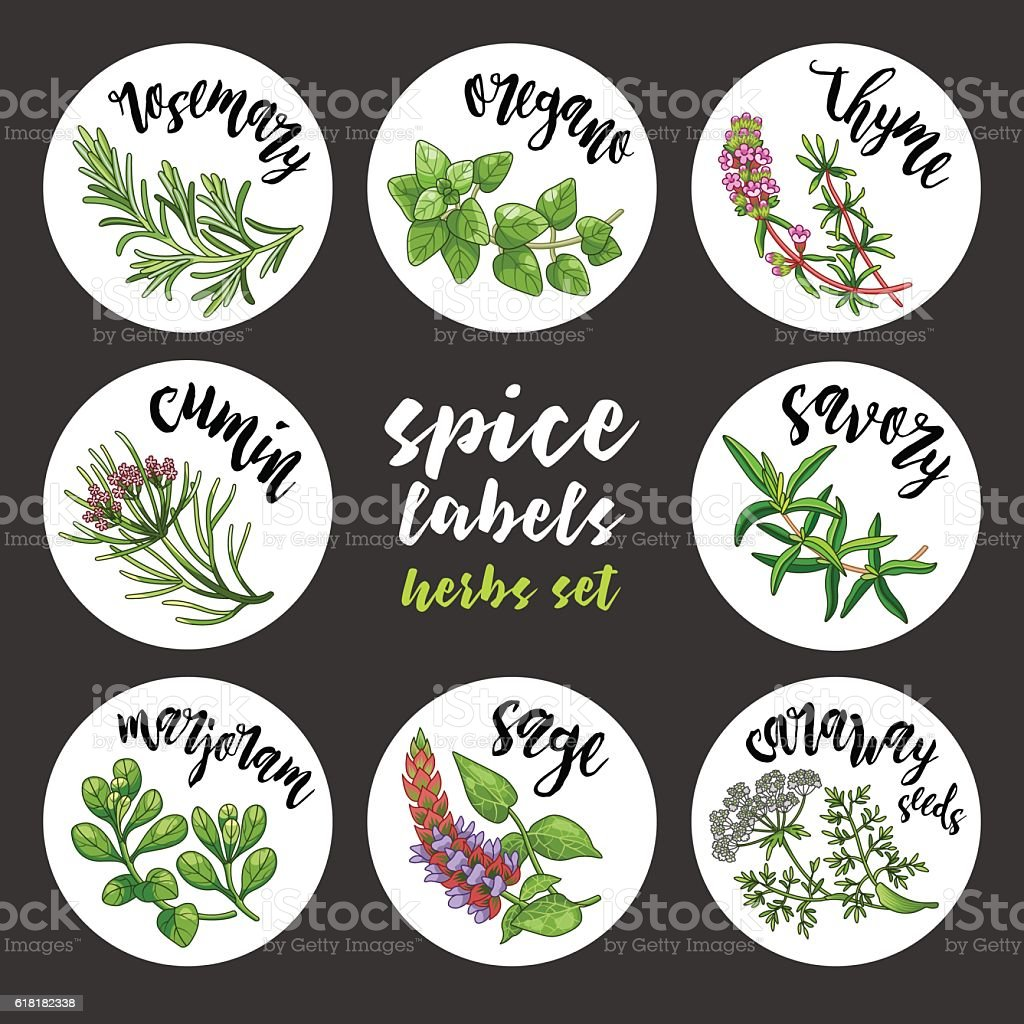 Spices and herbs labels and stickers. Colored vector herbal set vector art illustration