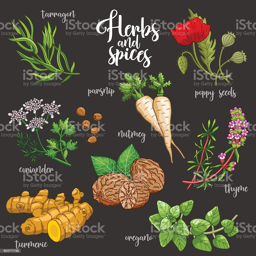 Spices and herbs vector set. Colored on dark vector art illustration