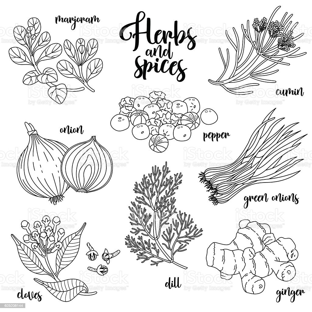 Spices and herbs vector set. Contour on white vector art illustration