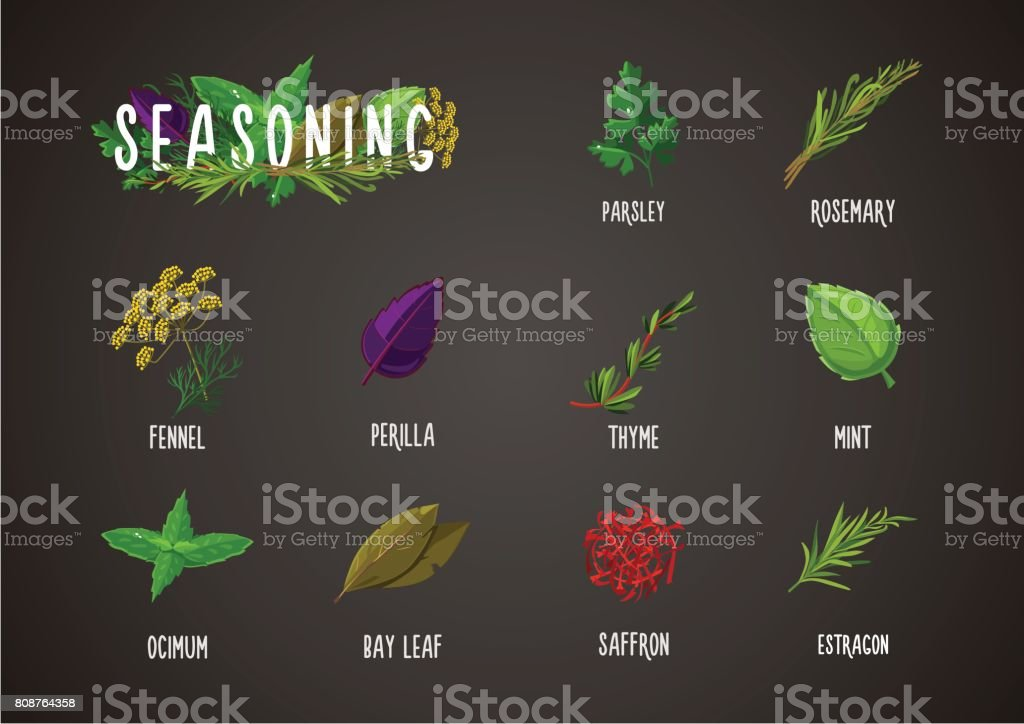 Spices and seasoning. Cooking ingredients. Culinary herbs and plants collection. vector art illustration