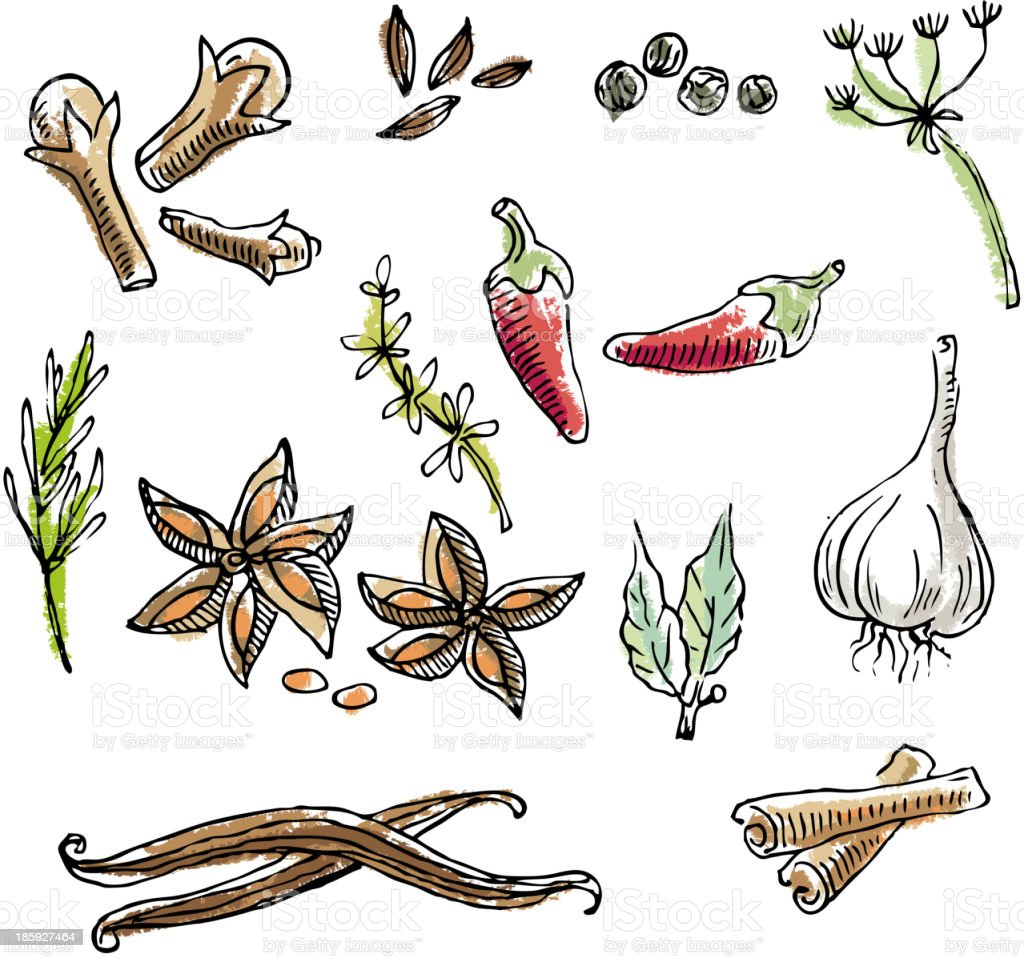 Spices doodles vector art illustration