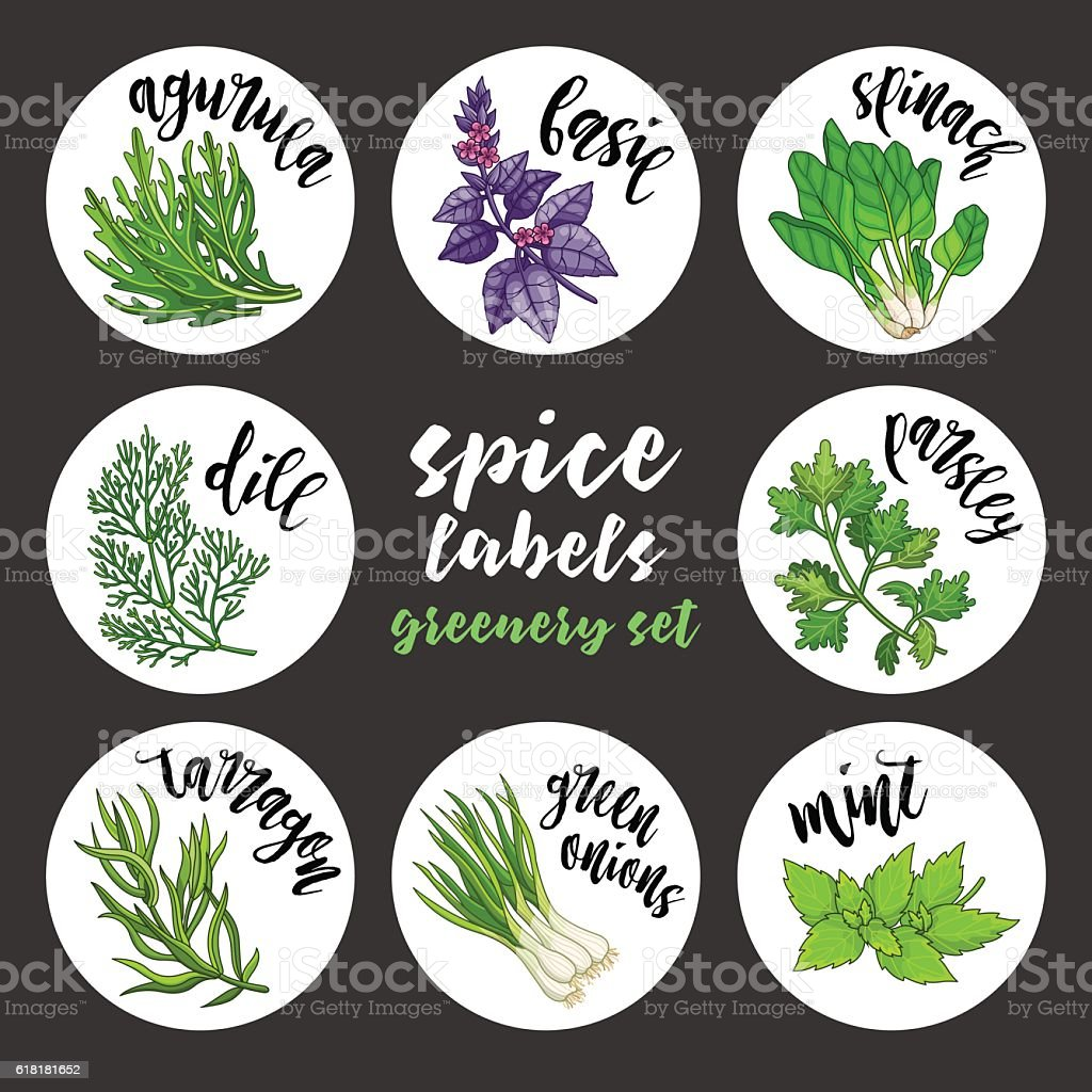 Spices herbs labels and stickers. Colored vector greenery set vector art illustration