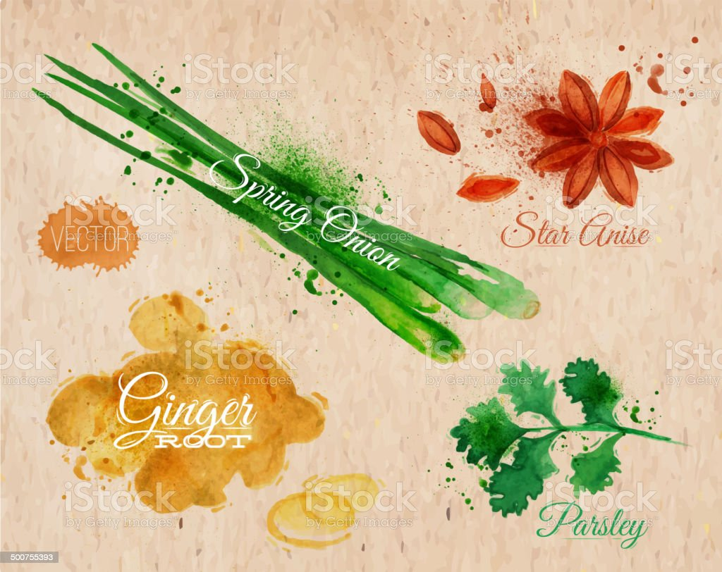 Spices herbs watercolor star anise, parsley, spring onion, ginger root vector art illustration