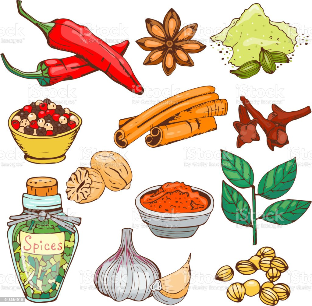 Spices seasoning hand drawn style food herbs elements and seeds ingredient cuisine flower buds leaves food plants healthy organic vegetable vector illustration vector art illustration