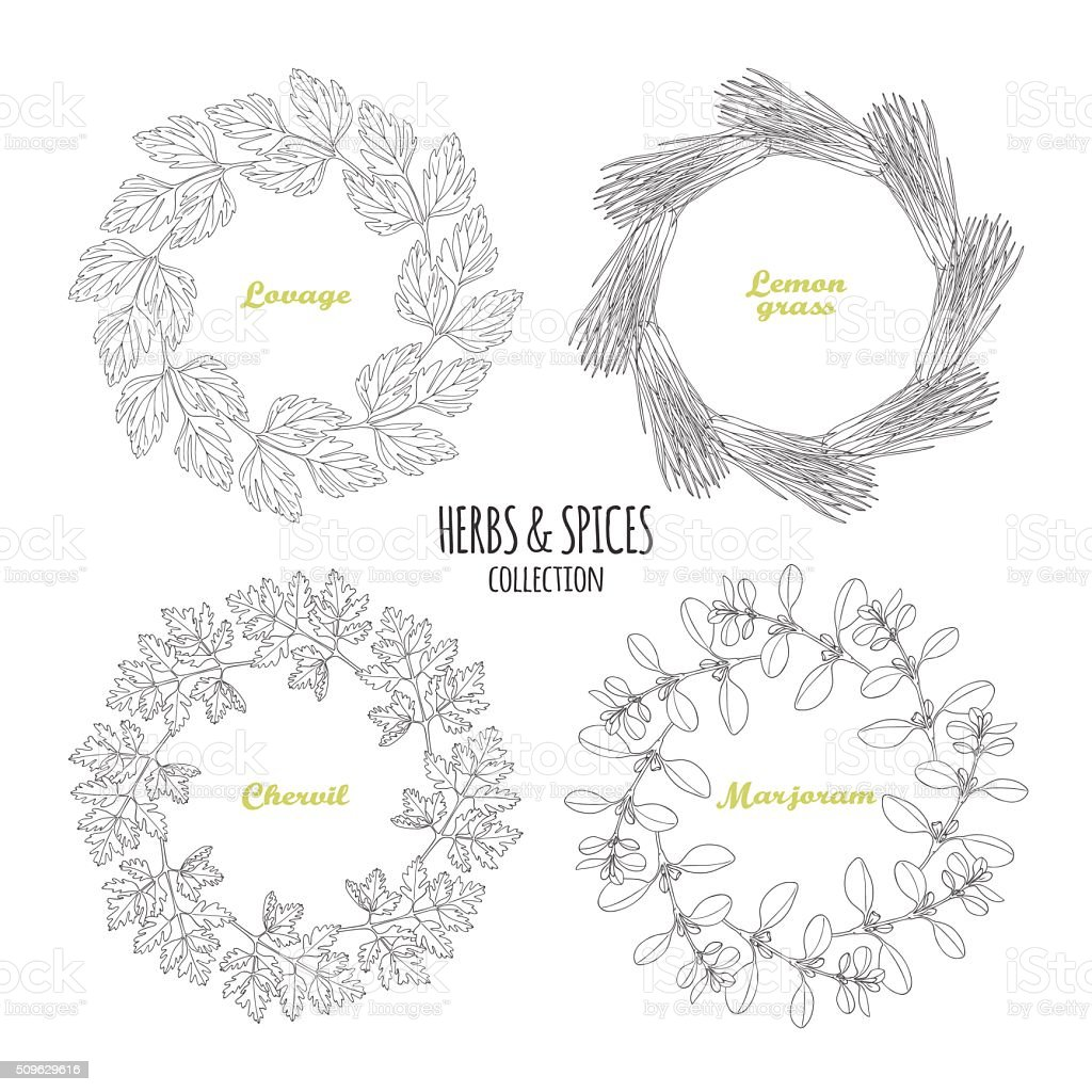 Spicy herb circle frames collection. Hand drawn lovage, lemongrass, chervil vector art illustration