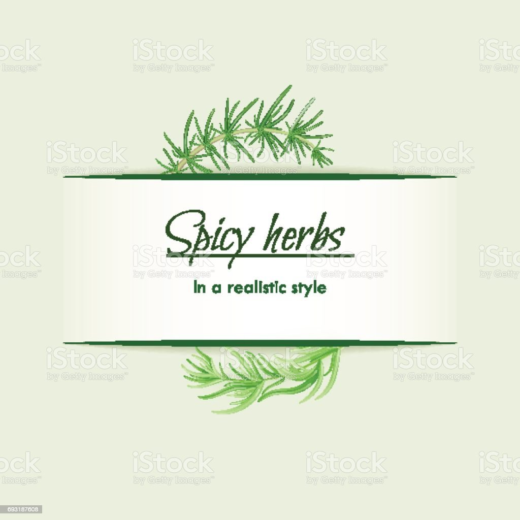 Spicy herbs in a realistic style, frame on background vector art illustration