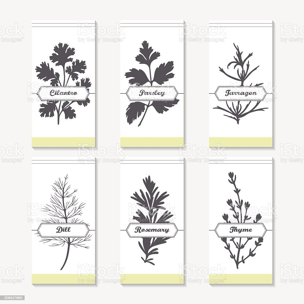 Spicy herbs silhouettes collection. Hand drawn cilantro, parsley, tarragon, dill vector art illustration