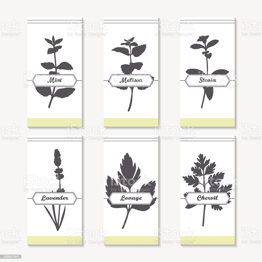 Spicy herbs silhouettes collection. Hand drawn mint, melissa, stevia, lavender vector art illustration