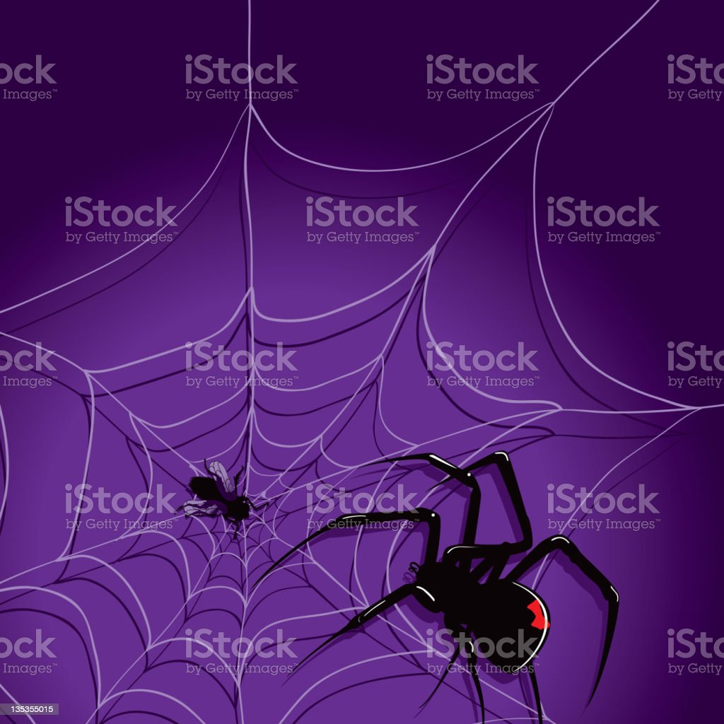 Spider and Fly Black on a web royalty-free stock vector art