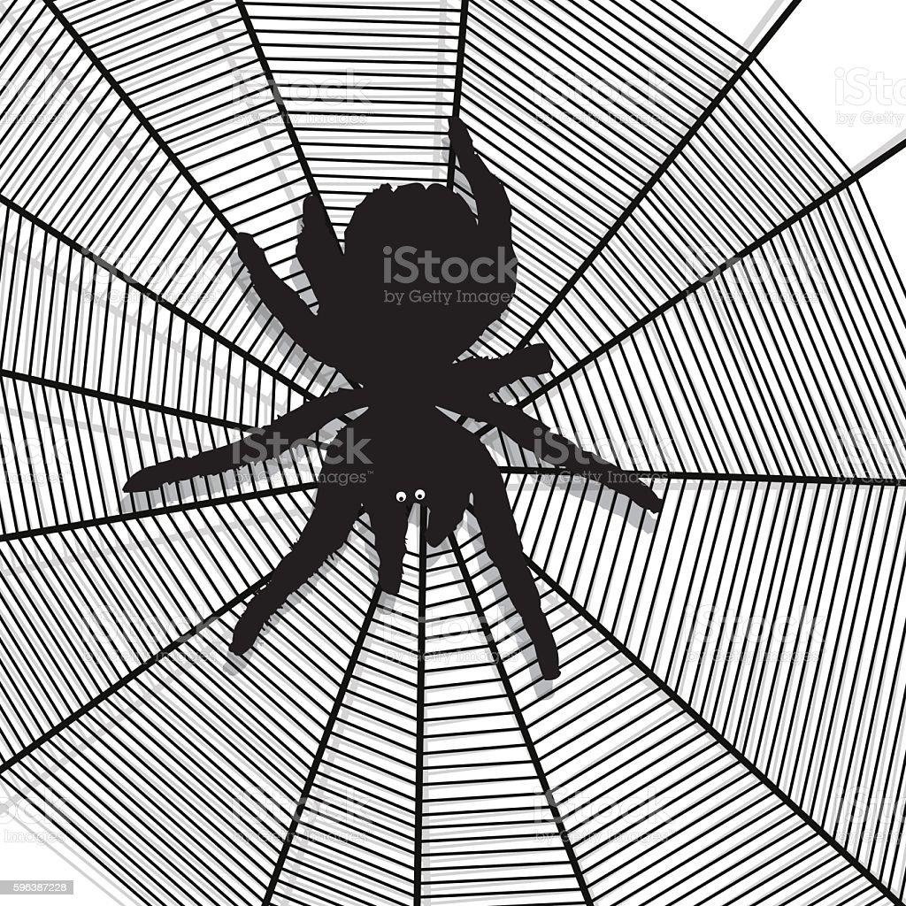 spider web texture background vector art illustration