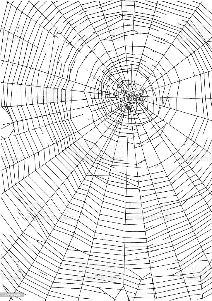 Spider Web royalty-free stock vector art