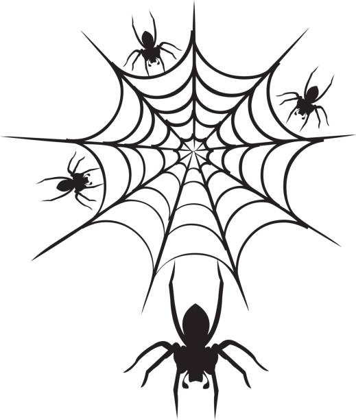 Black Widow Spider Clip Art, Vector Images & Illustrations - iStock