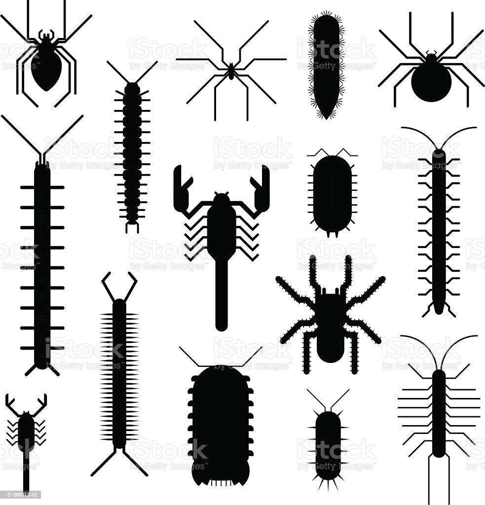 Spiders and scorpions dangerous insects animals vector black...