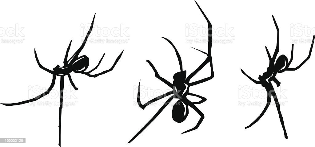 Spiders vector art illustration
