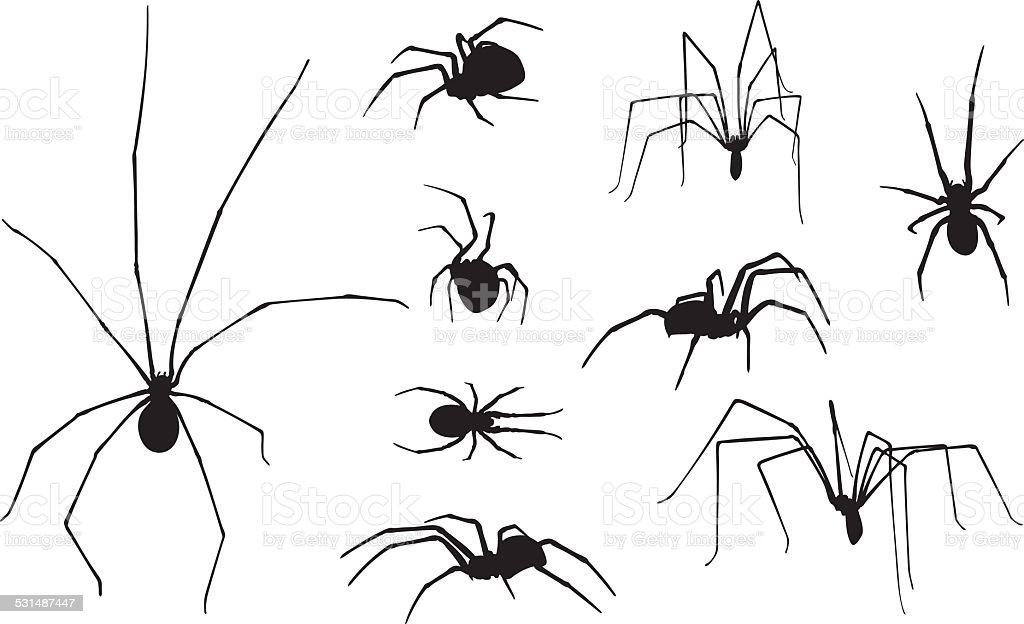 spiders vector art illustration