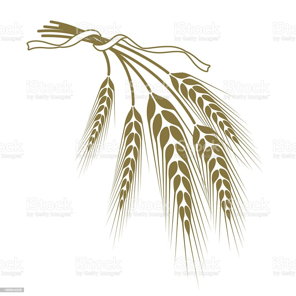 spikelets of wheat tied with a ribbon vector art illustration