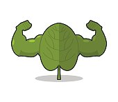 Spinach strong. Useful Herbs with big muscles. Green leaves lett