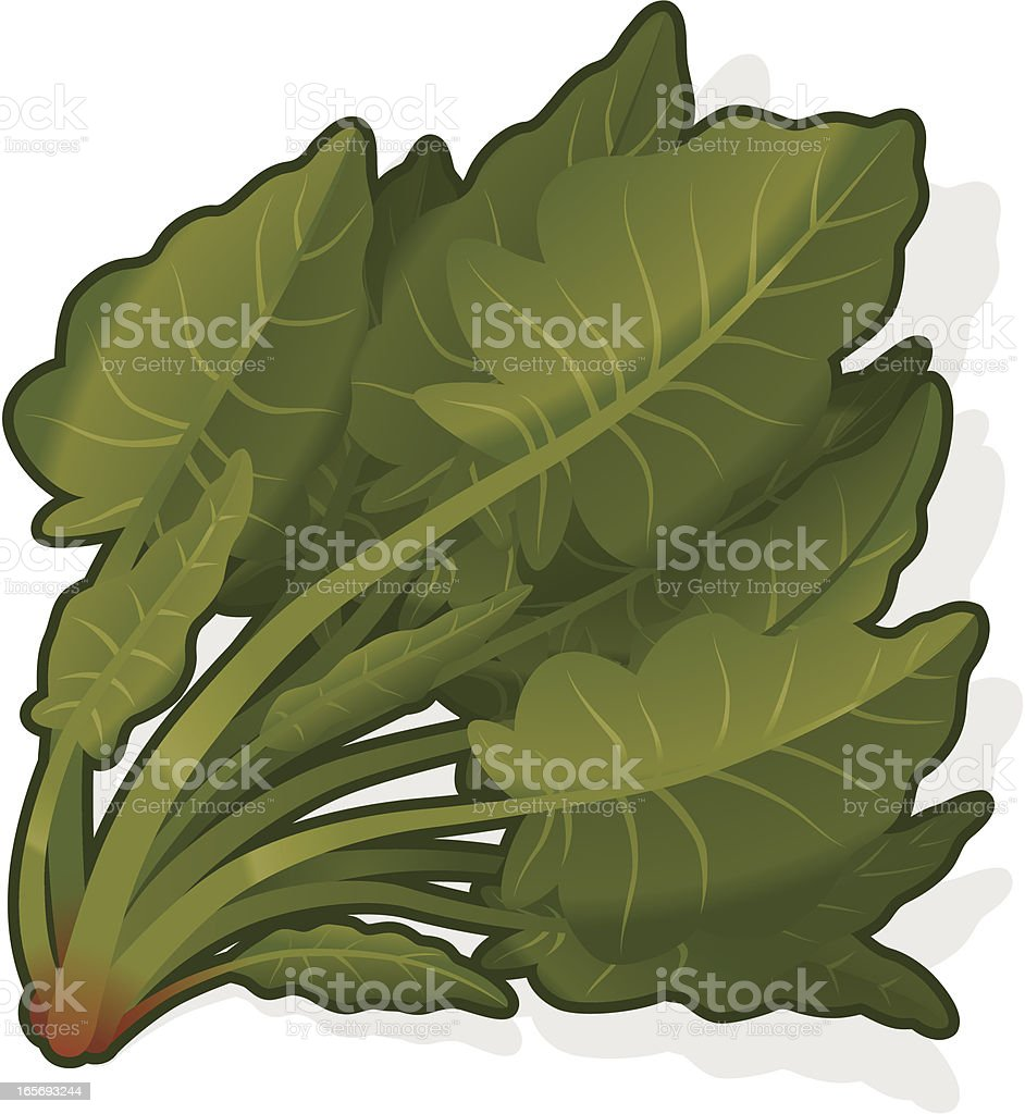 Spinach vector art illustration