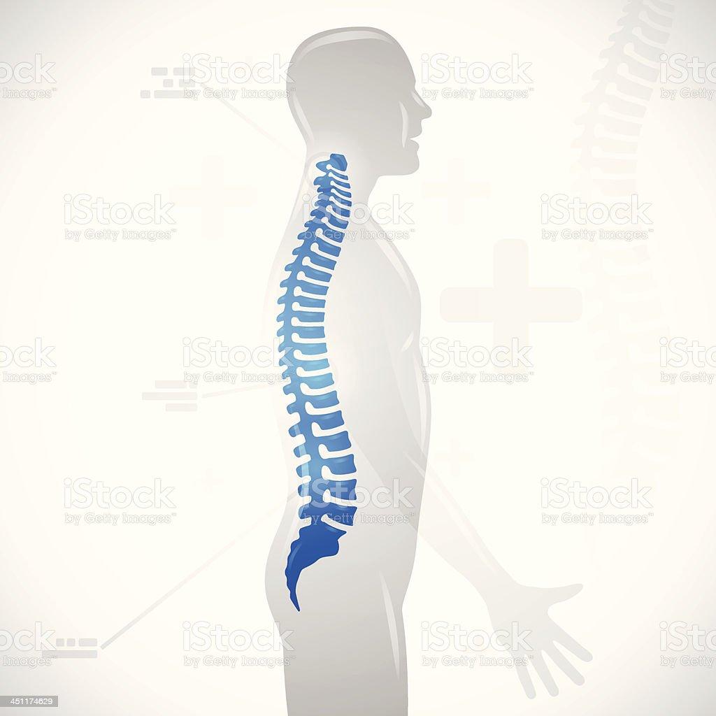 Spine Health vector art illustration
