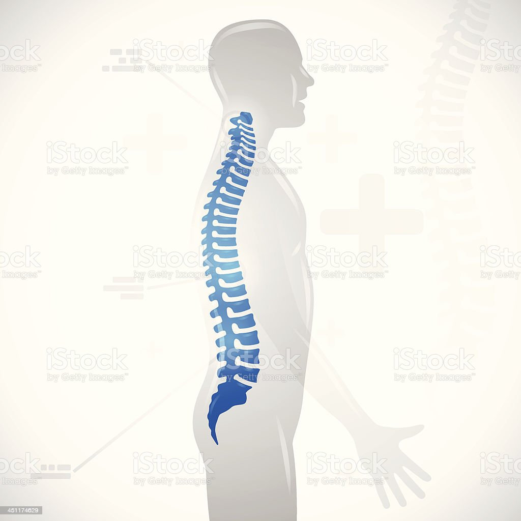 Spine Health vector art illustration