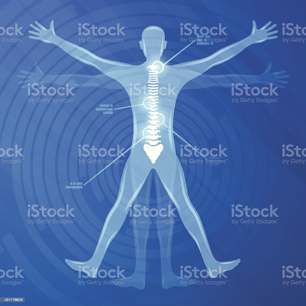 Spine Illustration royalty-free stock vector art