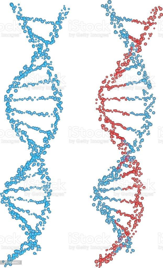 DNA spirals vector art illustration