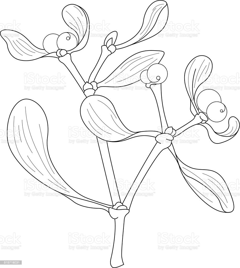 Sprig of mistletoe drawing vector art illustration