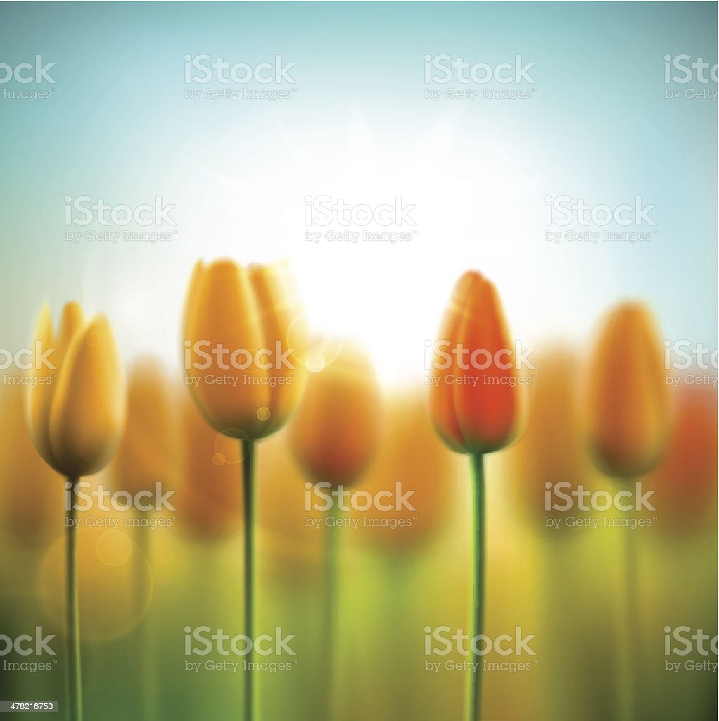Spring background with tulips vector art illustration
