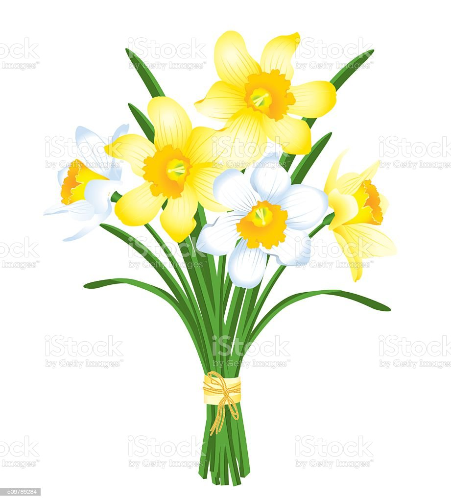 spring bouquet of yellow and white daffodils vector art illustration