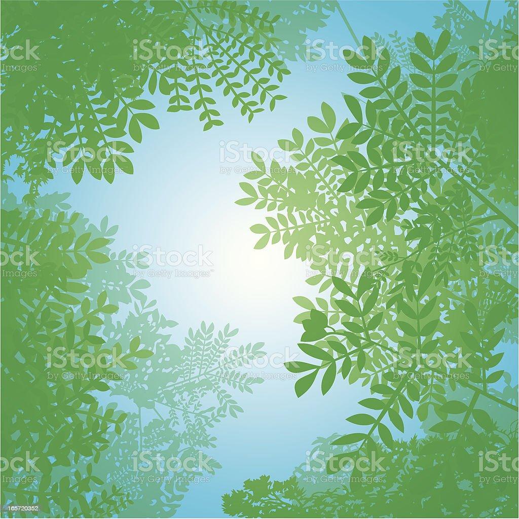 Spring Canopy vector art illustration