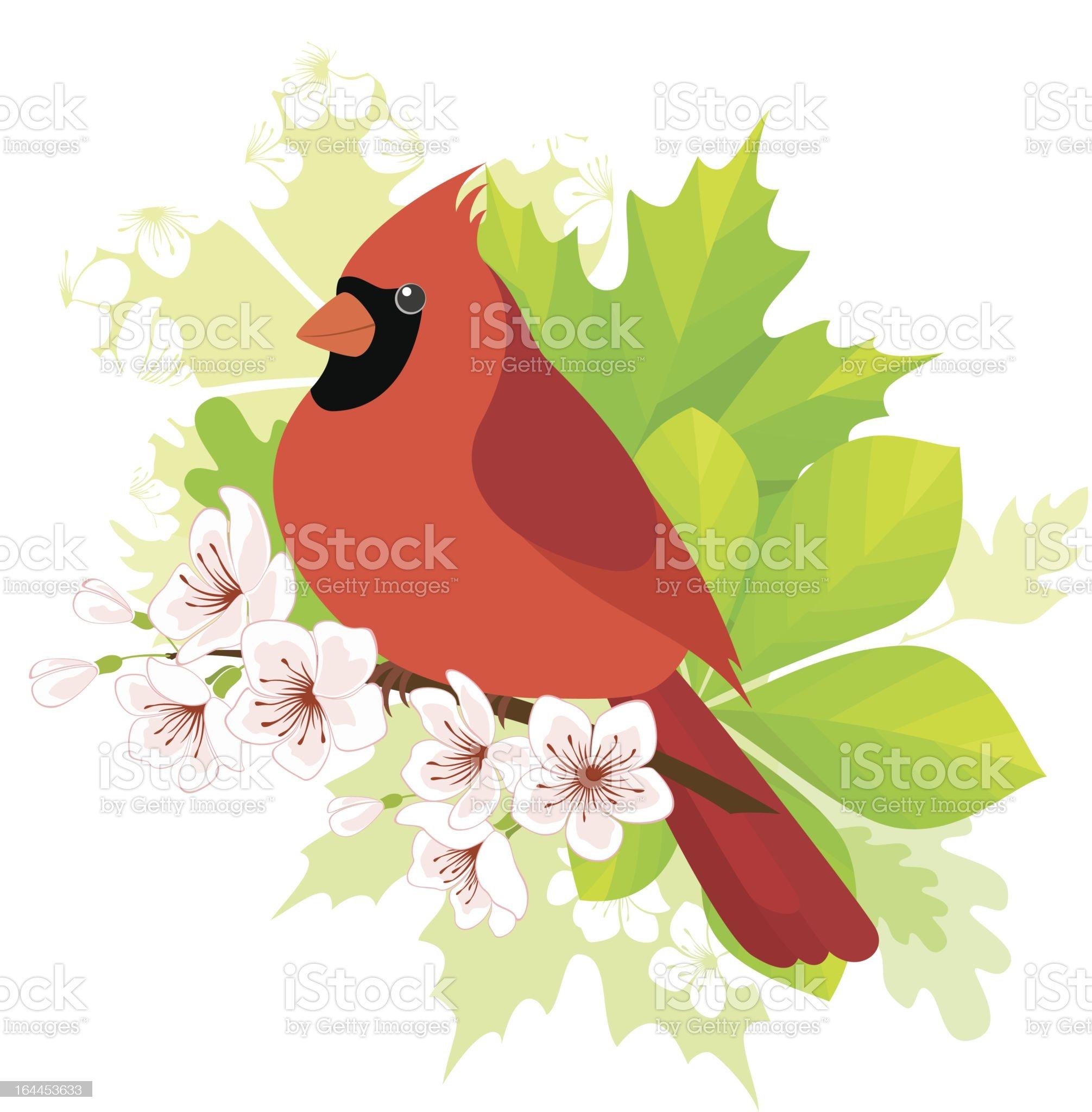 Spring cardinal royalty-free stock vector art