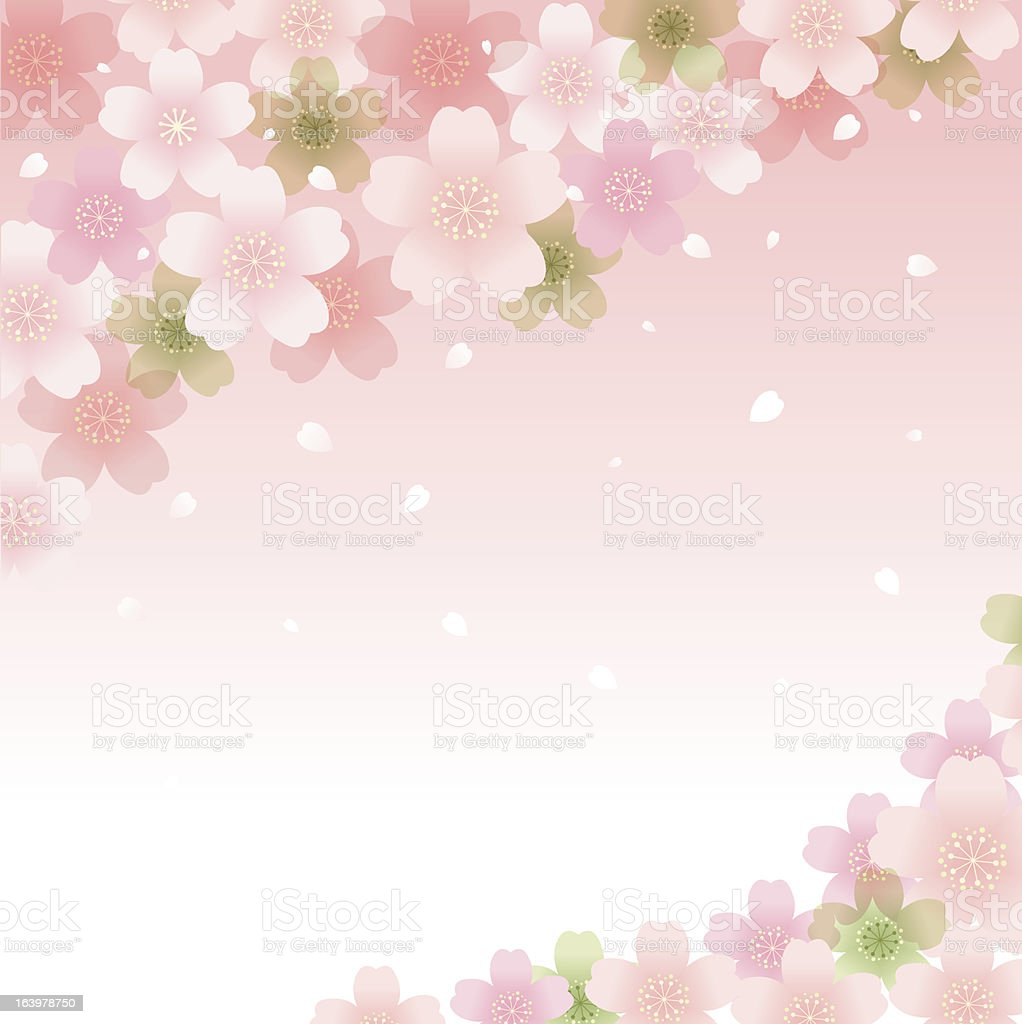 Spring Cherry blossom background royalty-free stock vector art
