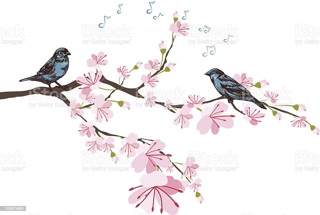 Spring Cherry Blossoms & Sketchy Blue Sparrows Perched on Branch vector art illustration