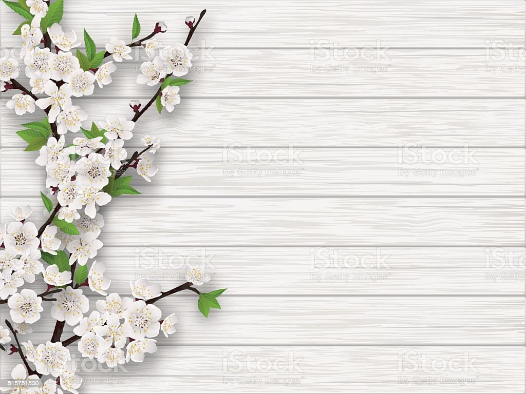 spring cherry branch on white old wood background vector art illustration