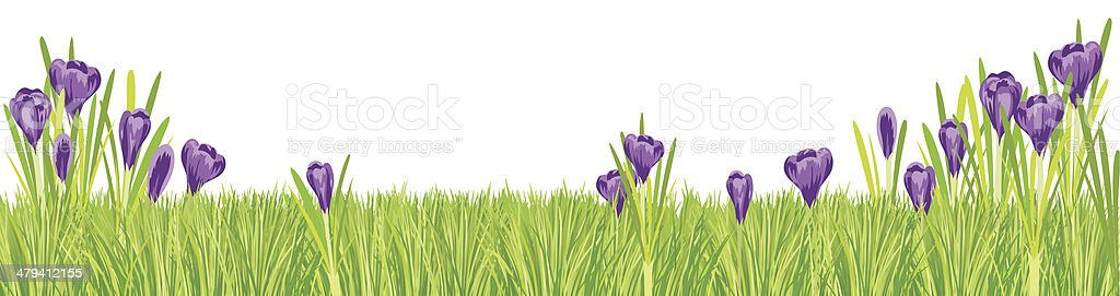 Spring Crocus and Grass Border vector art illustration