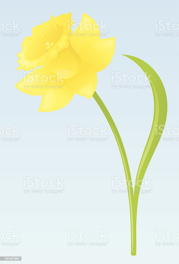 Spring Daffodil - incl. jpeg royalty-free stock vector art