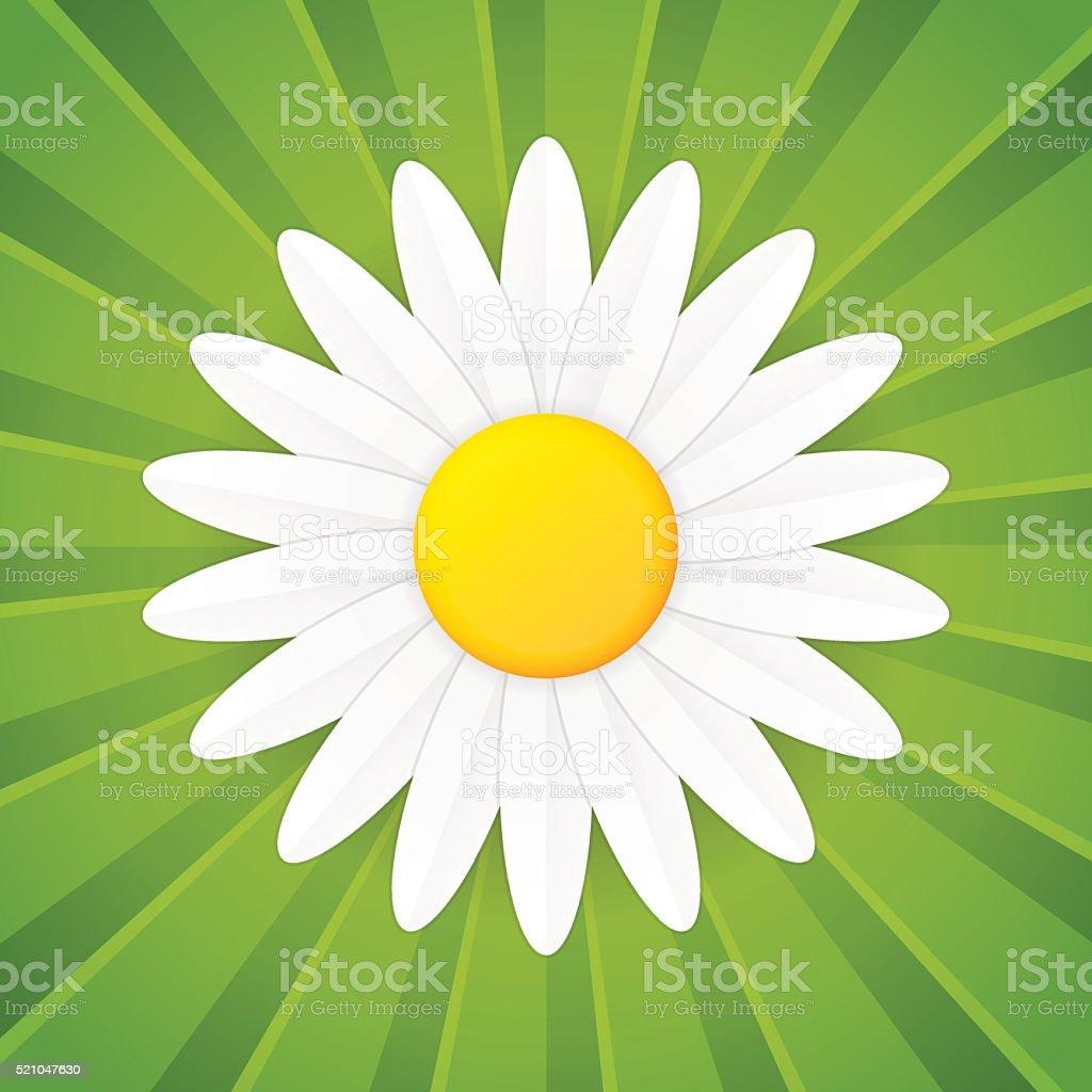 Spring flower daisy vector icon vector art illustration