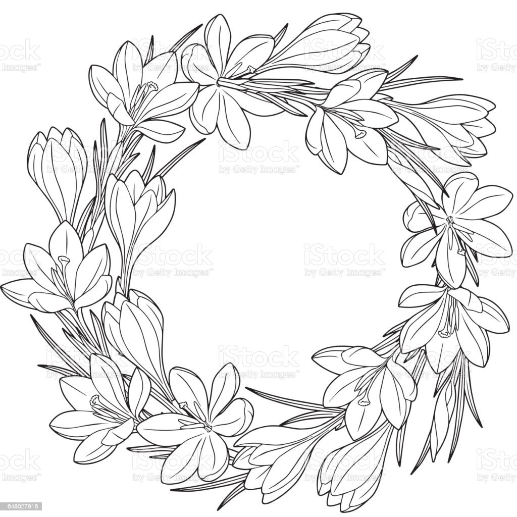 Line Drawing Spring Flowers : Spring flower vignett of crocuses vector elements isolated