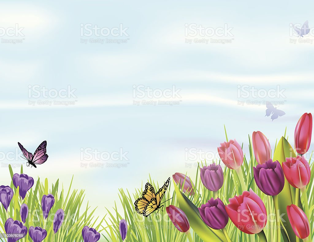 Spring Flowerbed with Tulips and Crocuses vector art illustration