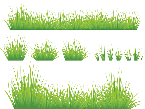 blade of grass vector - photo #21
