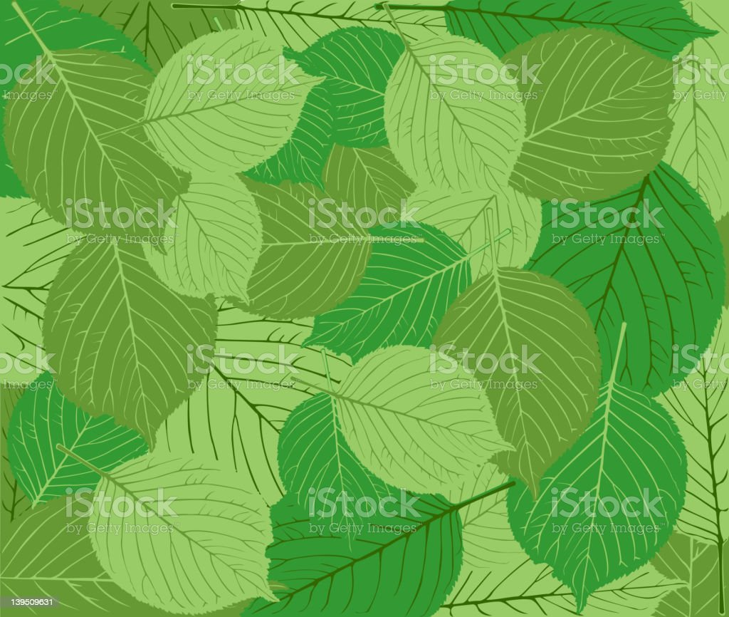 Spring green leave background royalty-free stock vector art