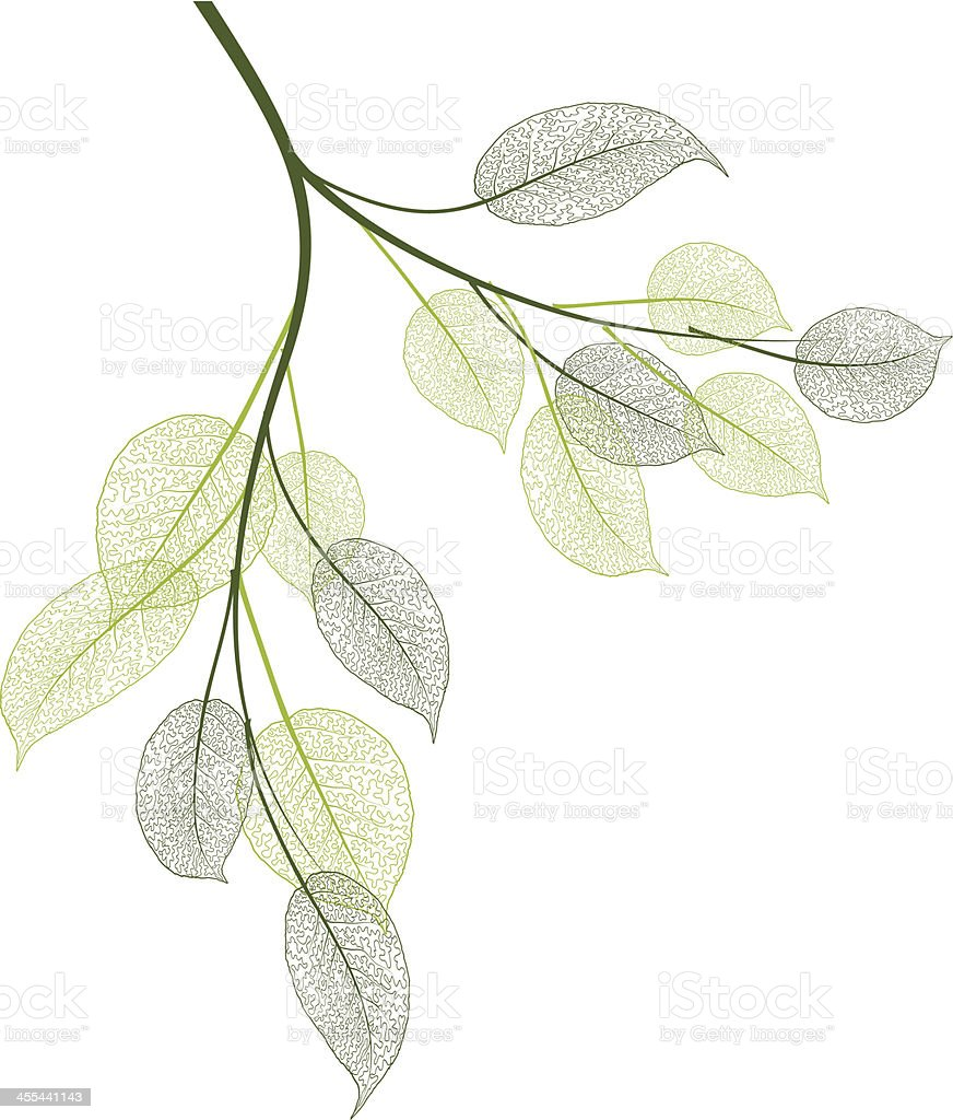 spring leaves vector art illustration