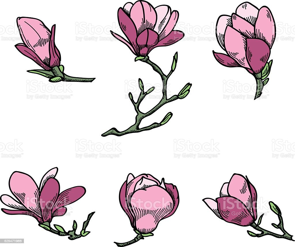 Spring magnolia flowers collection. vector art illustration