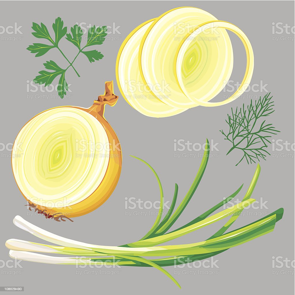 spring onion, parsley, dill, greens royalty-free stock vector art