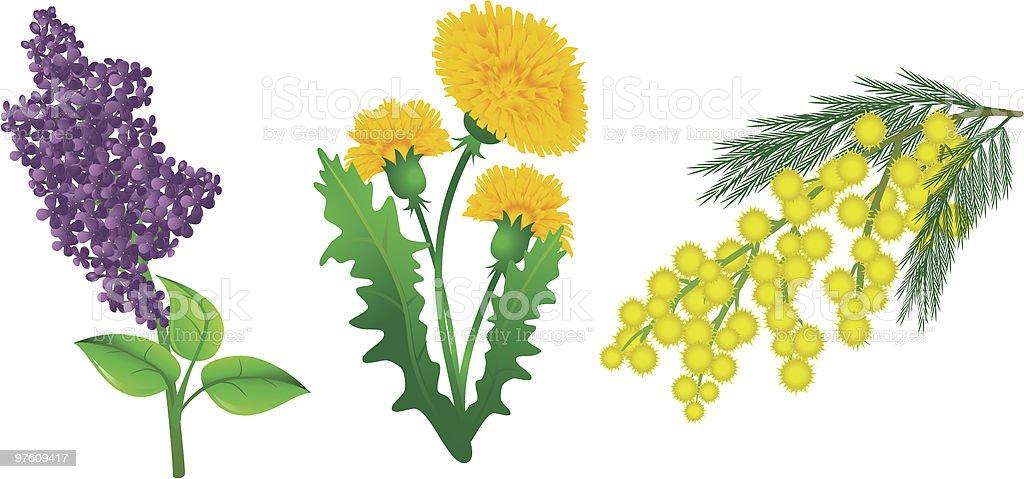 Spring plants vector art illustration