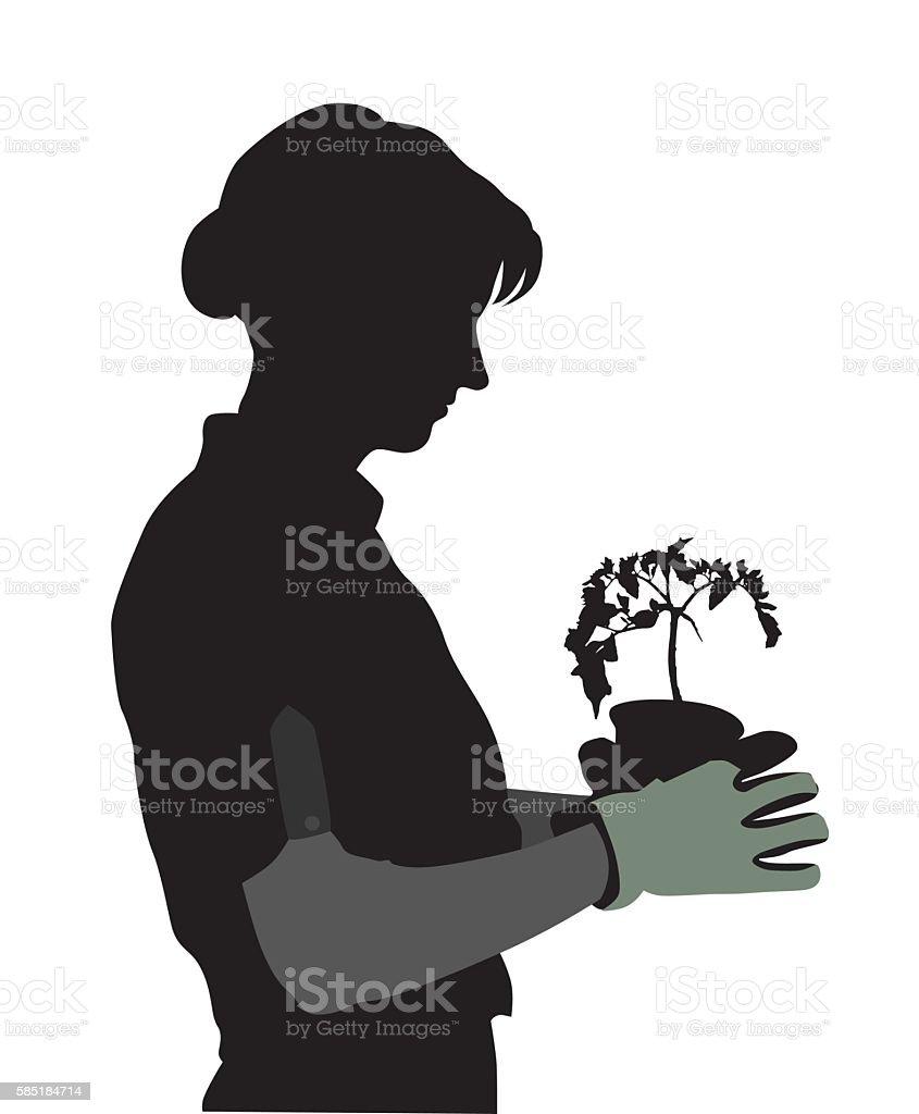 Spring Time Tomato Sprouts Gardener vector art illustration